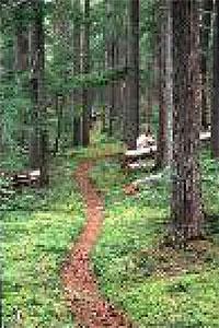 trail-03